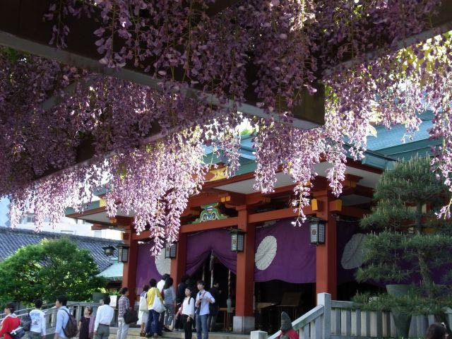 日枝神社の藤棚